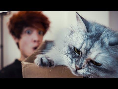 Katzen Videos in den Youtube Trends? | Gong Bao & Kiko