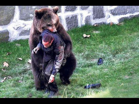Man Was Attacked And Killed By A Grizzly Bear.
