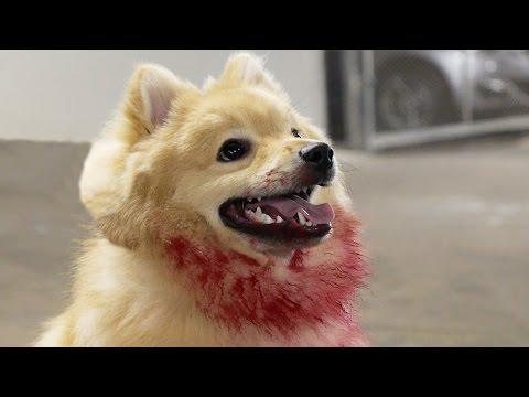 Crazy Cute Killer Dog Prank