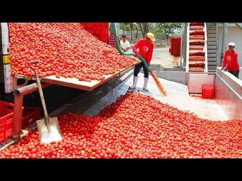 FAST WORKERS Compilation 2017 ★ People Are Awesome Fastest Everything Street Food Processing Skills