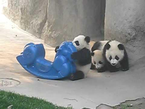 Baby Panda On Pony Rocker Gets Help From Brother! CUTE!!