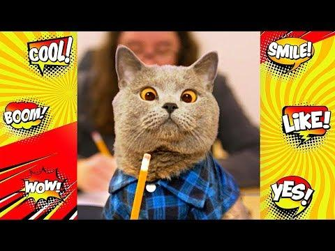 Funny cat video | Epic Cat Fails Compilation | Funny videos