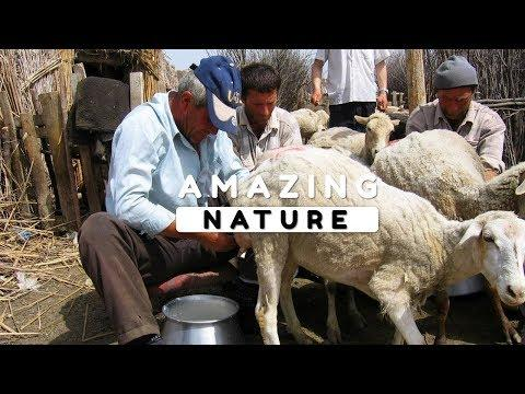Beautiful Nature Video in Full HD - The Lifestyle of the Village People Episode 3 - 12 Minute