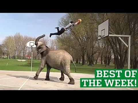 Best Videos of the Week - People Are Awesome