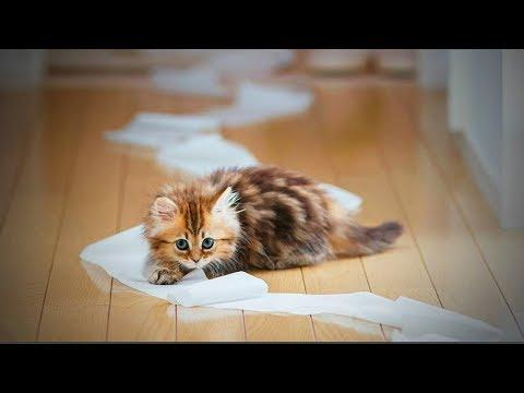 Funny Pets ???????? Funny and Cute Baby Animals (Part 2) [Funny Pets]