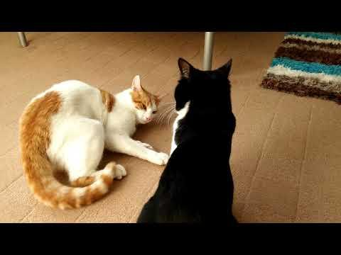 Cute, Funny Cats Compilation Video - 4K Ultra Hd 2160p - 有趣的猫视频