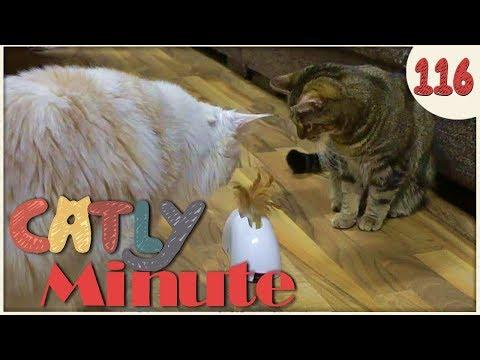 Fiependes Feder Ding - Catly Minute - 116 - Balui - mit Miri - Katzenvideo