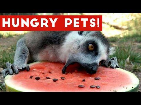 The Funniest Hungry Pet & Animal Videos Weekly Compilation 2017 | Funny Pet Videos