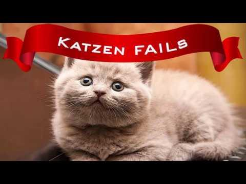 #1 Katzen FAILs Lustiges Video zum totlachen - Best Funny Cats Compilation Pannen