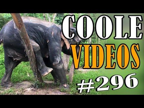 Coole Videos #296 || ✪ Stern DuTube