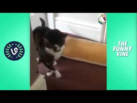 TubeSpaghetti   Funny Cats Compilation 2016   Best Funny Cat Videos Ever    Funny Vines