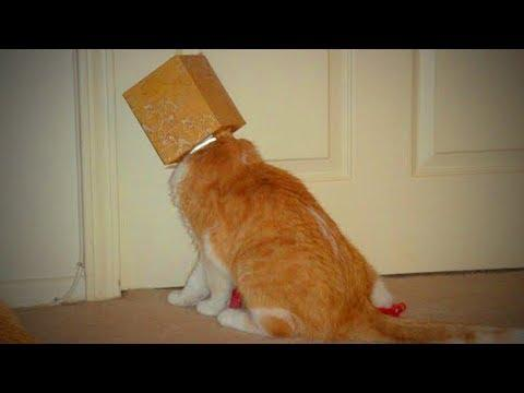 Clumsy Cats ???????? Funny Cats Fails (Full) [TNT Channel]