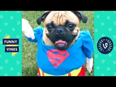 [20 MIN] SUPER DOG! Funny Animals Compilation 2018!