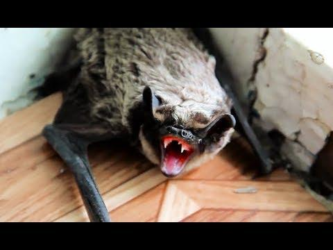 Coole Videos #359: Fledermaus im Haus! || ✪ Stern DuTube