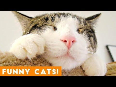 Funniest Cat Compilation September 2018 | Funny Pet Videos