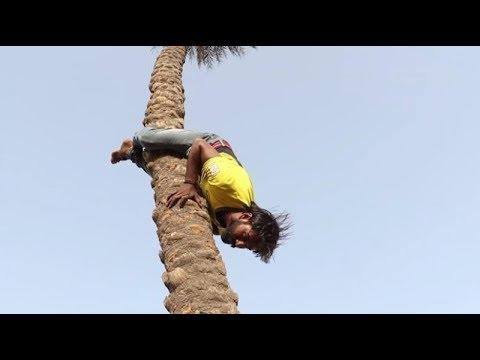 India's Only Reverse Tree Climbers | Backward Tree Climbers | People Are Awesome 2017 | TalentDunia