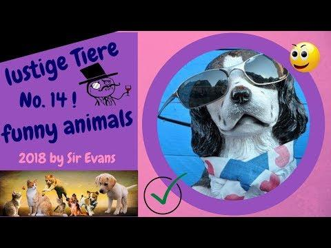 """kurze witzige Videos -- """"snoring into autumn"""":  funny animals, mixed by SirEvans 2018"""