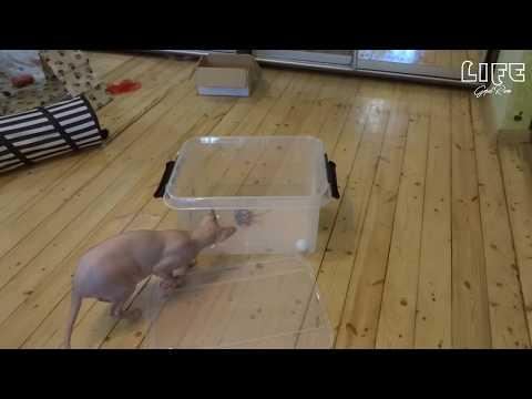 Funny cat videos | Funny Dogs | Funny Cat Laughing | Cute Kitten | Kitten playing