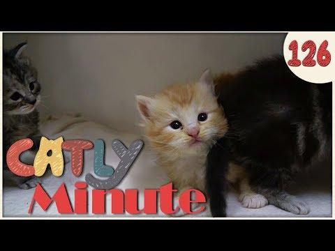 Kitten gone wild - Catly Minute - 126 - Balui - mit Miri - Katzenvideo