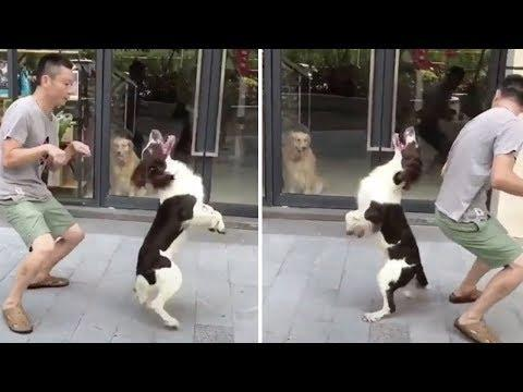 Funny Dogs and Cats Compilation 2018 | Funny dog videos try not to laugh #7