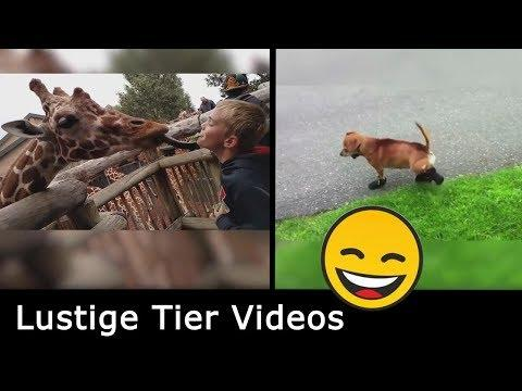Lustige Tier Videos  |  Funny clips  |  смешные видео  |  Versuch nicht zu lachen