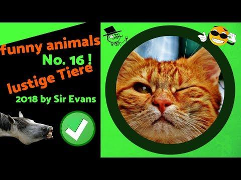 lustige kurze videos tiere - funny animals mixed by Sir Evans 2018