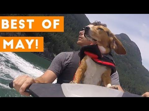 Ultimate Animal Reactions & Bloopers of May 2018 | Funny Pet Videos