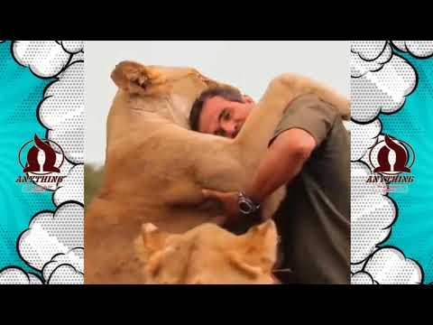 Lion and Human True Love Story   People are Awesome   Amazing Video 2017