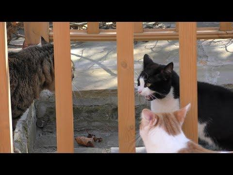 Crazy Cat Standoff - 4K Ultra Hd 2160p Video - 猫视频 - Original