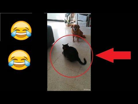 Lustige Katze Video 2018! Katze und Tennisball! Cat is doing funny thing! try not to laugh