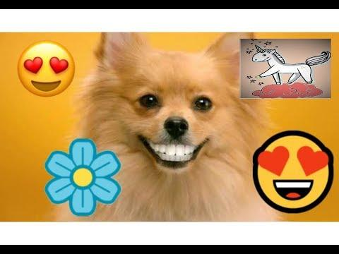 TRY NOT TO LAUGH CHALLENGE ???????????? FUNNY VIDEOS????????????