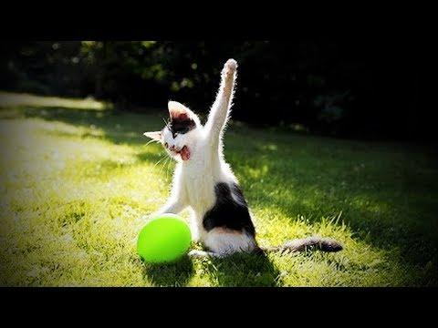 Cats and Dogs Vs. Balloons ???????? Funny Cats and Dogs Playing Balloons [Funny Pets]