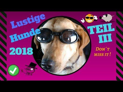 witzige Hunde Videos 2018 -- New mix by SirEvans