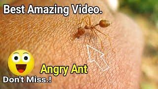 Best Amazing Video ||  Amazing Experiment On Anger Ants || #Amazing Video 2019.
