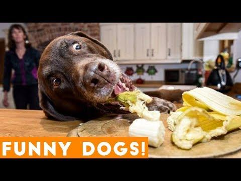 Ultimate FUNNIEST DOG / Puppy Compilation Try Not to Laugh Challenge 2018 | Funny Pet Videos