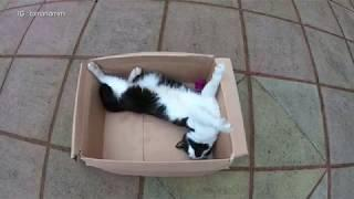 Cat Playing In A Box : 4K Ultra Hd 2160p Video