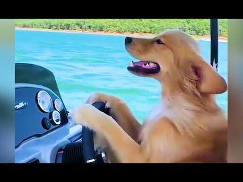 Coole Videos #356: Hund am Steuer! || ✪ Stern DuTube