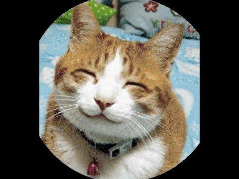 #3 Katzen FAILs Lustiges Video zum totlachen - Best Funny Cats Compilation Pannen