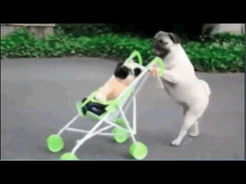 Lustiges Video mit Tiere ! - Funny Video with Animals !