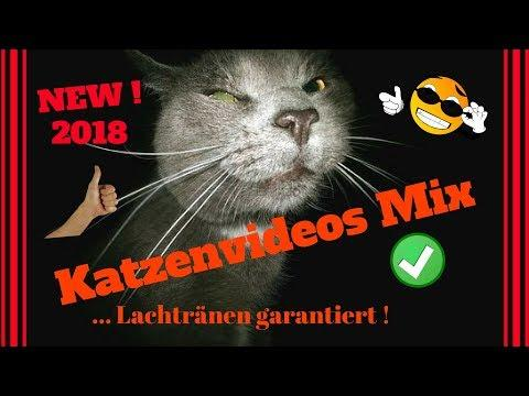 witzige Katzen Videos Youtube -- NEW -- 2018 !