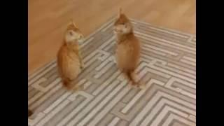 Video Cats 772