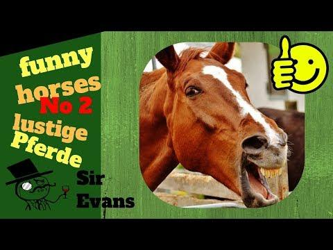 kurze Pferde Videos -- enjoy the beauty of horses.. including some funny moments. Mixed by Sir Evans
