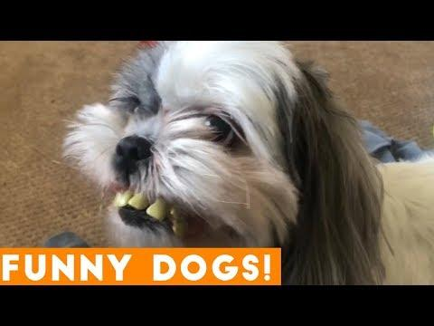Ultimate FUNNIEST DOG / Puppy Compilation Try Not to Laugh March 2018 | Funny Dog Videos