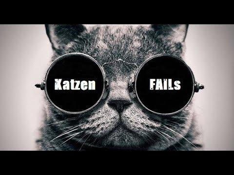 #2 Katzen FAILs Lustiges Video zum totlachen - Best Funny Cats Compilation Pannen