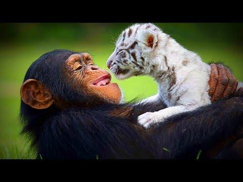 Animal's Best friends ???????? Unbelievable Animals Friendship (Full) [Funny Pets]