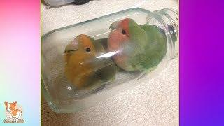 ???? Cute Parrots Doing Funny Things #8 - ???? Cutest Parrots In The World 2018
