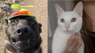 Animal world ???????? Cute Animals Funny Videos ???? life is so lovely