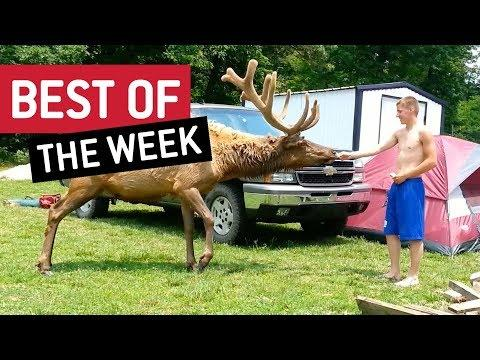 Best Of The Week June  Week 1 2018 || JukinVideo