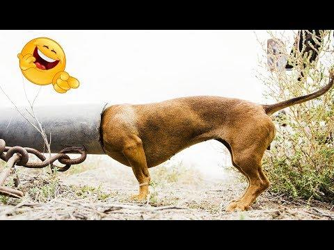 Videos Whatsapp Try not to laugh or grin Funny videos 2018