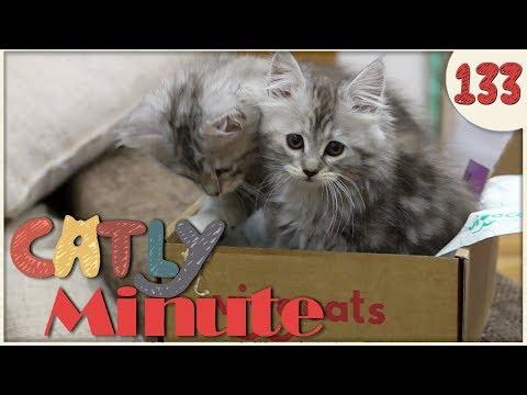 Unboxing mit Kitten - Catly Minute - 133 - Balui + Miri33